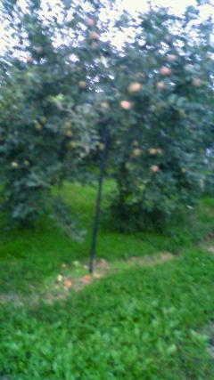 佐藤さんのりんご