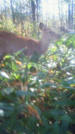 鹿も来てくれました。