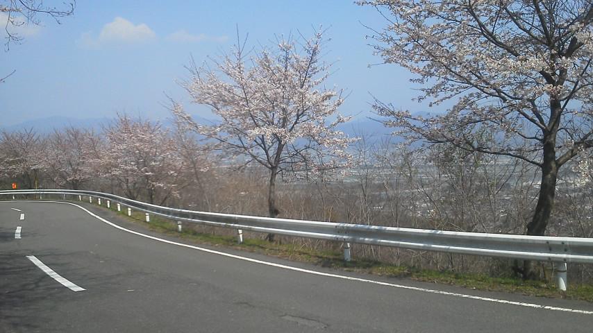 川島チェリーロード