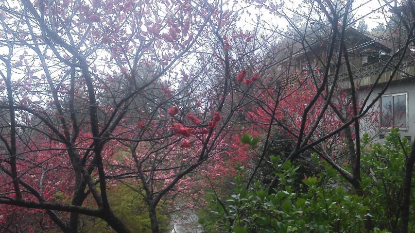 4月22日雨