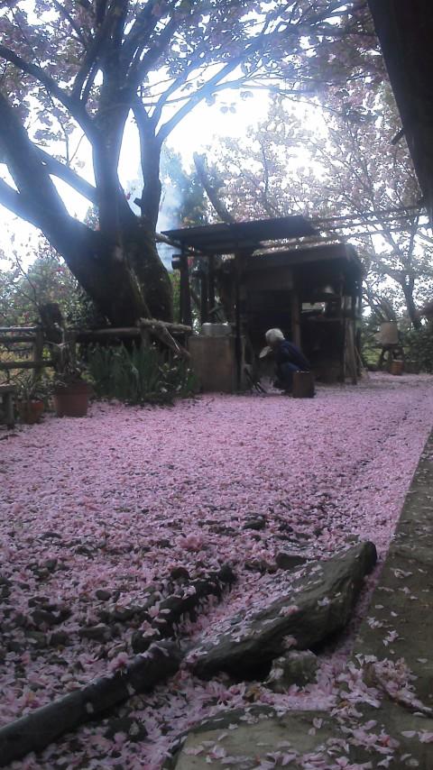 ピンクじゅうたん