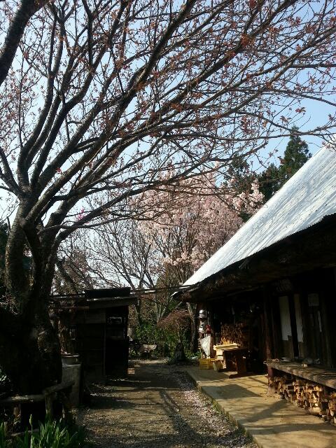 4月9日花桃&桜祭り