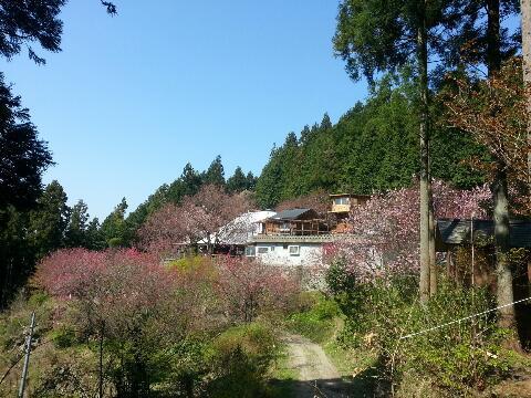 4月13、1<br />  4日桃、桜祭り