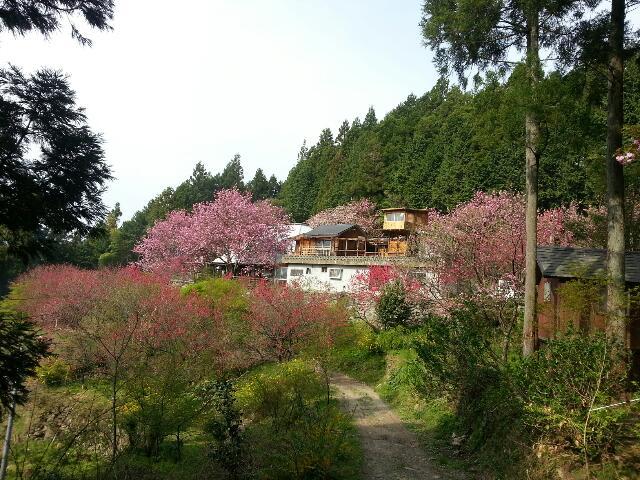 4月17日桜情報