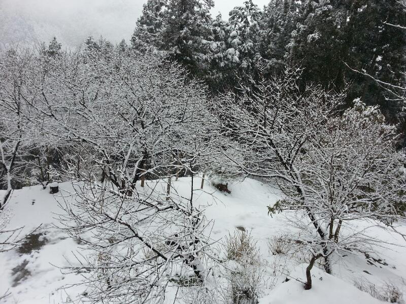 またまた雪〜