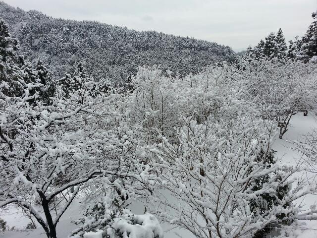 今日も雪〜