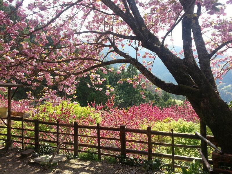 心地よい春風25日