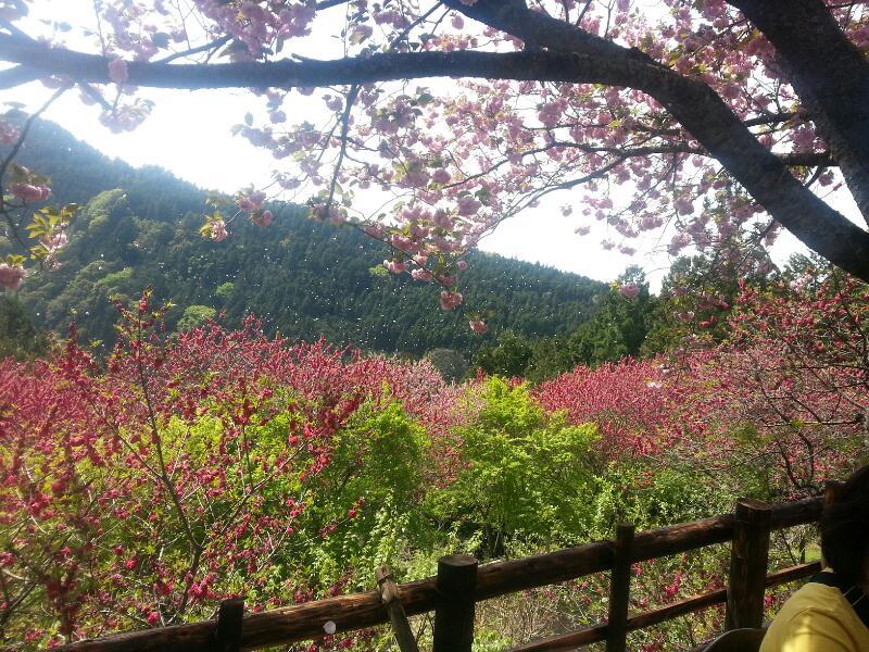 4月27日桜吹雪