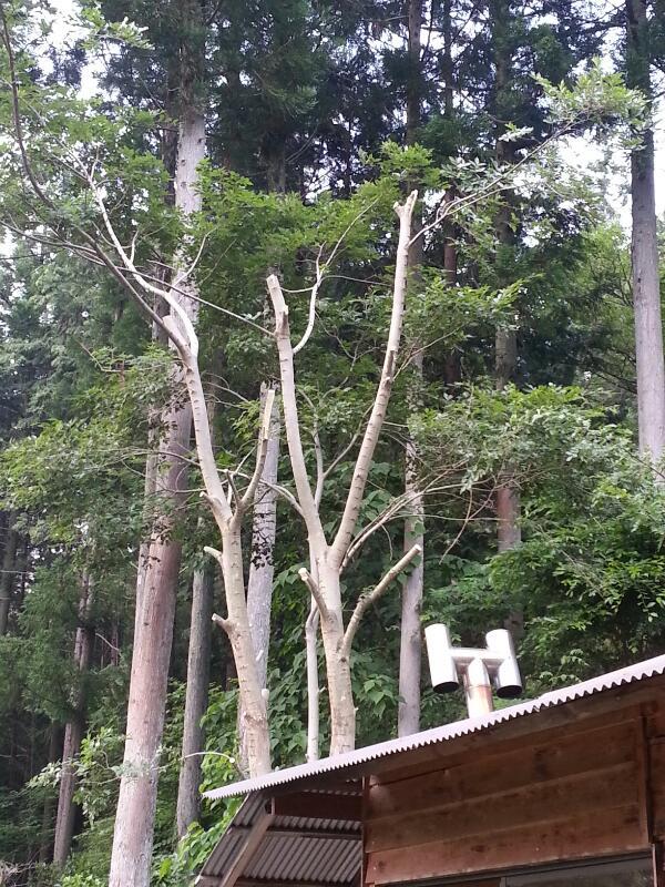 木に登って伐る