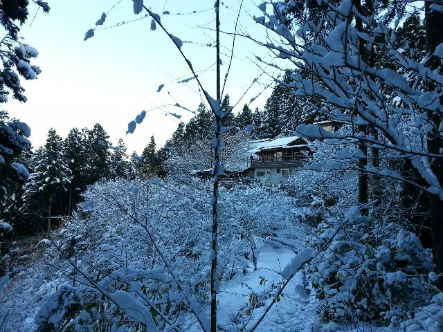 雪積もってます